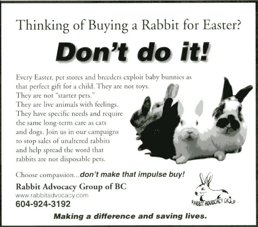 Thinking about buying a rabbit f talk1410 am april 2 2009 carmina gooch president rabbit advocacy group of bc no rabbits for easter gifts this was another opportunity to spread the negle Image collections