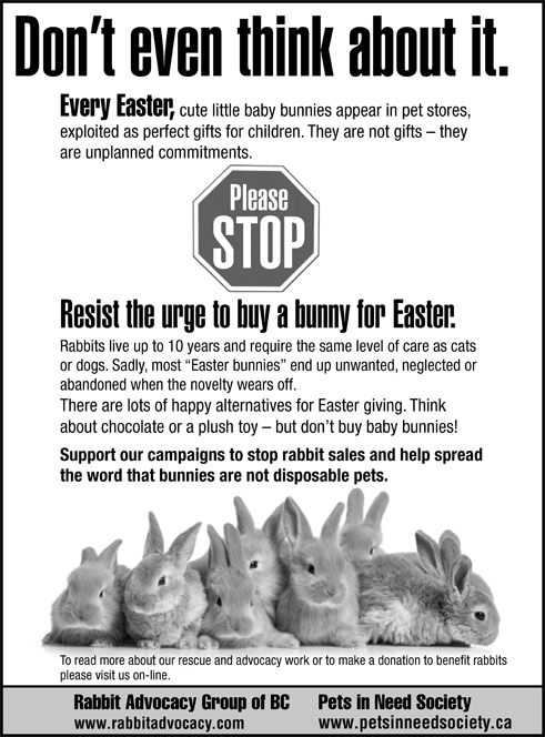 Easter rabbits the impulse buy negle