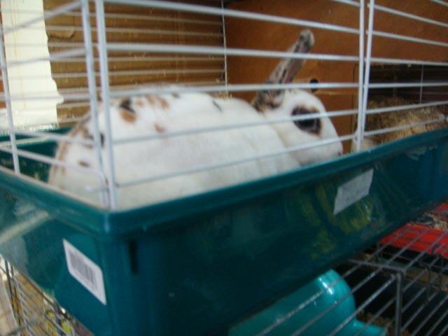 pet shops rabbits leg