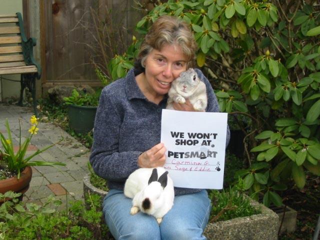 rabbits at petsmart
