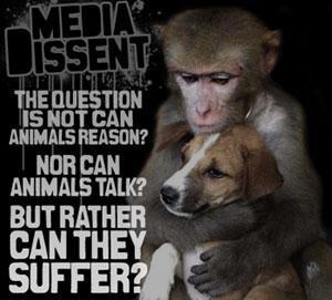 Sad Animal Abuse Quotes Horse Cruelty Quotes Quotesgram