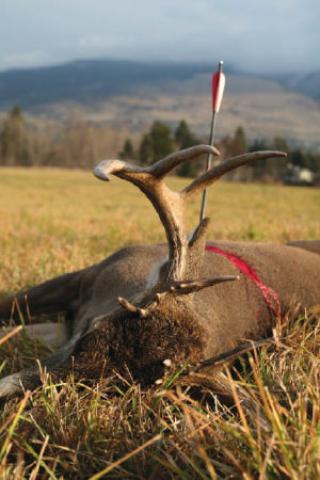 Poaching And Pit Lamping
